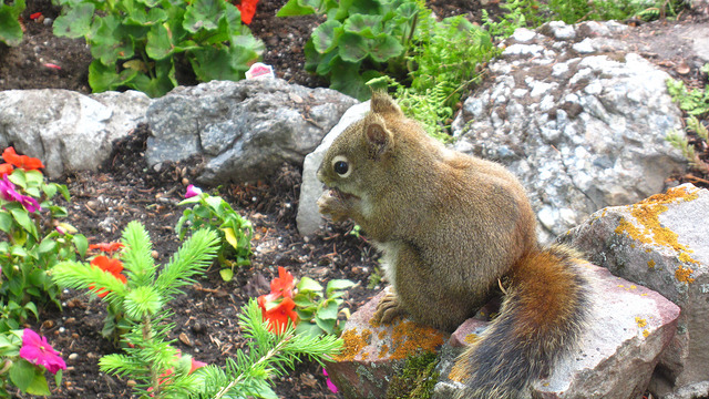 Baby squirrel having a snack