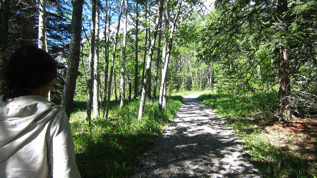 Looking for Bankhead